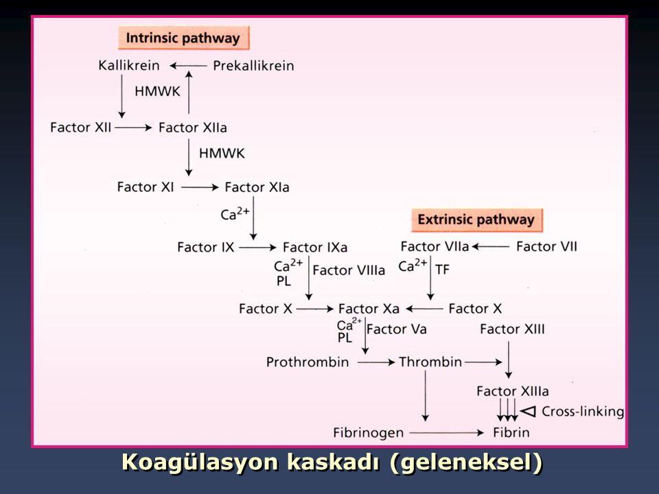 Koagülasyon kaskadı (geleneksel)