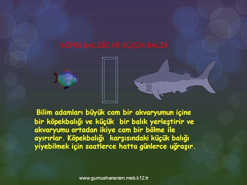 Bilim adamları büyük cam bir akvaryumun içine bir köpekbalığı ve küçük bir balık yerleştirir ve akvaryumu ortadan ikiye cam bir bölme ile ayırırlar.