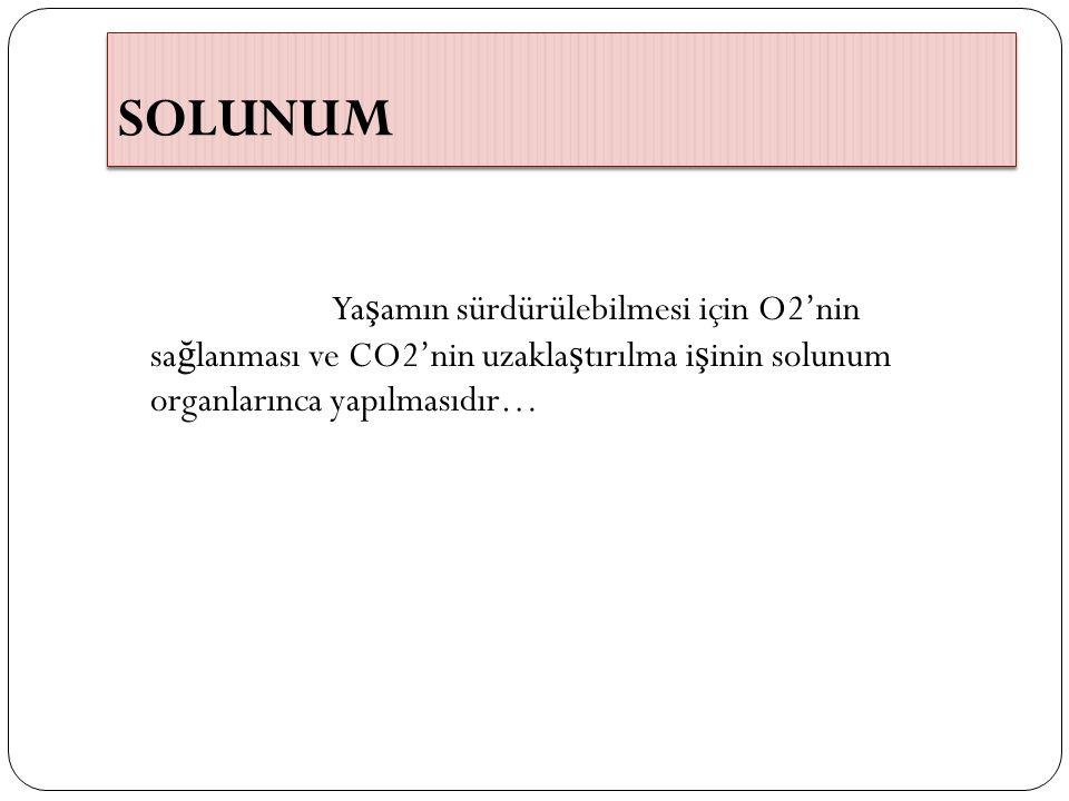 Solunum sisteminin görevi Bu i ş levi üç mekanizma ile gerçekle ş tirir.