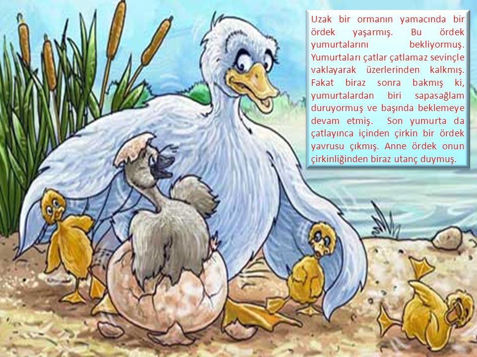 Uzak bir ormanın yamacında bir ördek yaşarmış.Bu ördek yumurtalarını bekliyormuş.
