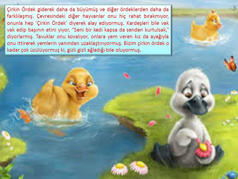 Çirkin Ördek giderek daha da büyümüş ve diğer ördeklerden daha da farklılaşmış.