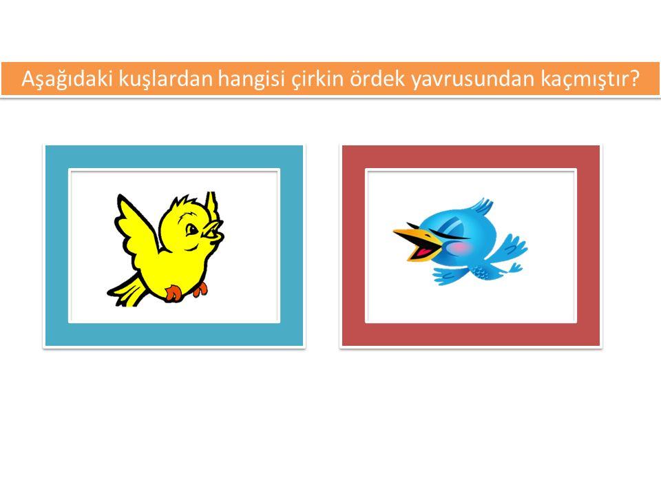 Aşağıdaki kuşlardan hangisi çirkin ördek yavrusundan kaçmıştır?