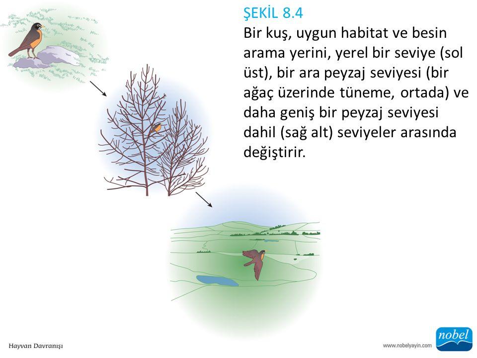 ŞEKİL 8.4 Bir kuş, uygun habitat ve besin arama yerini, yerel bir seviye (sol üst), bir ara peyzaj seviyesi (bir ağaç üzerinde tüneme, ortada) ve daha geniş bir peyzaj seviyesi dahil (sağ alt) seviyeler arasında değiştirir.