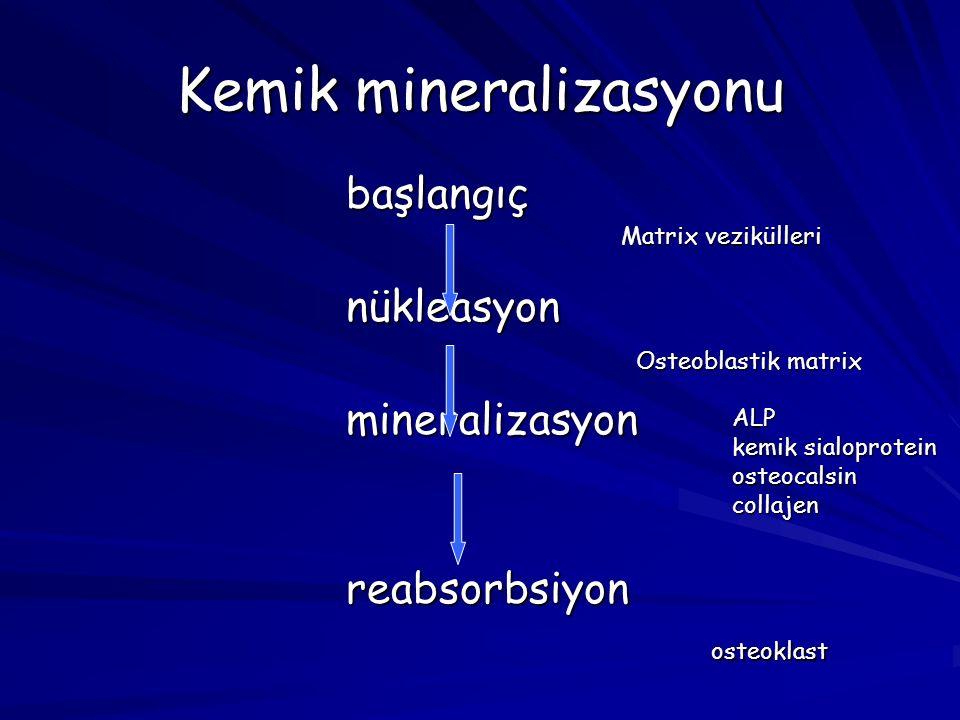 Kemik mineralizasyonu başlangıçnükleasyonmineralizasyonreabsorbsiyon Matrix vezikülleri Osteoblastik matrix ALP kemik sialoprotein osteocalsincollajen