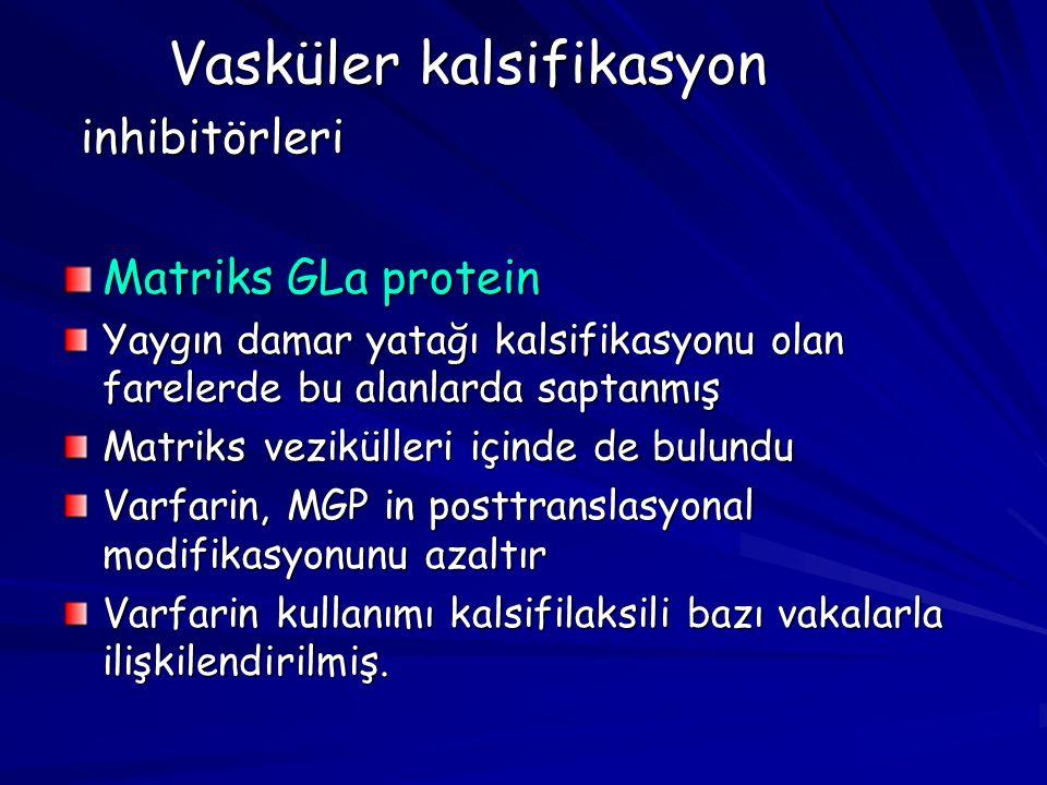Vasküler kalsifikasyon inhibitörleri Matriks GLa protein Yaygın damar yatağı kalsifikasyonu olan farelerde bu alanlarda saptanmış Matriks vezikülleri içinde de bulundu Varfarin, MGP in posttranslasyonal modifikasyonunu azaltır Varfarin kullanımı kalsifilaksili bazı vakalarla ilişkilendirilmiş.