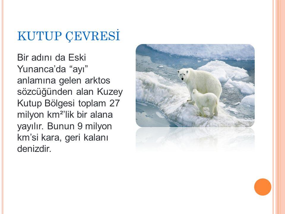 KUTUP ÇEVRESİ Bir adını da Eski Yunanca'da ayı anlamına gelen arktos sözcüğünden alan Kuzey Kutup Bölgesi toplam 27 milyon km²'lik bir alana yayılır.