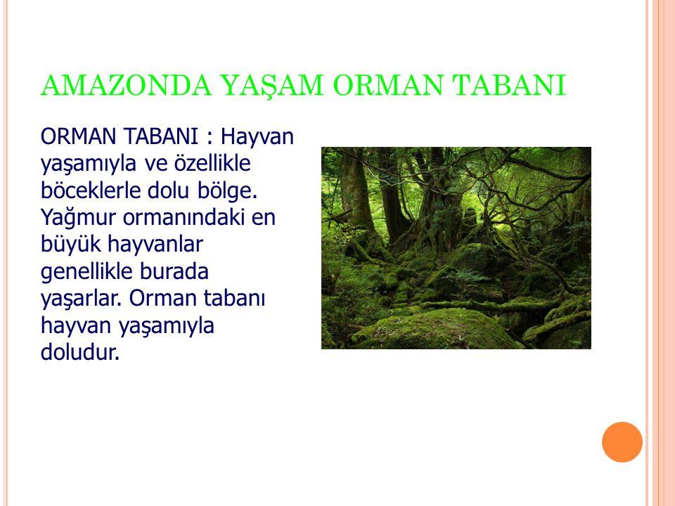 AMAZONDA YAŞAM ORMAN TABANI ORMAN TABANI : Hayvan yaşamıyla ve özellikle böceklerle dolu bölge.