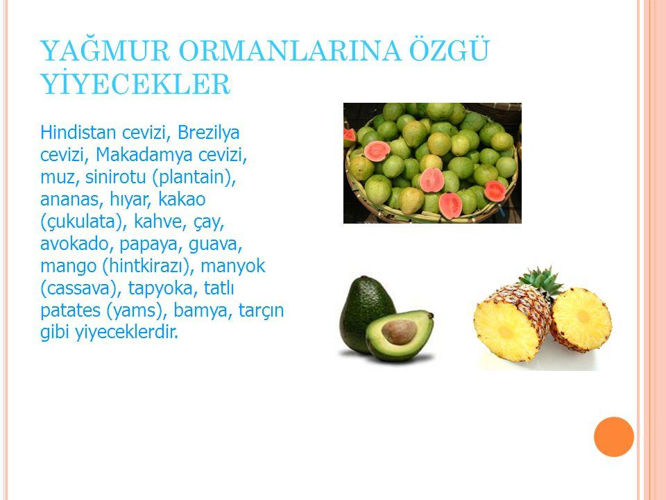 YAĞMUR ORMANLARINA ÖZGÜ YİYECEKLER Hindistan cevizi, Brezilya cevizi, Makadamya cevizi, muz, sinirotu (plantain), ananas, hıyar, kakao (çukulata), kahve, çay, avokado, papaya, guava, mango (hintkirazı), manyok (cassava), tapyoka, tatlı patates (yams), bamya, tarçın gibi yiyeceklerdir.