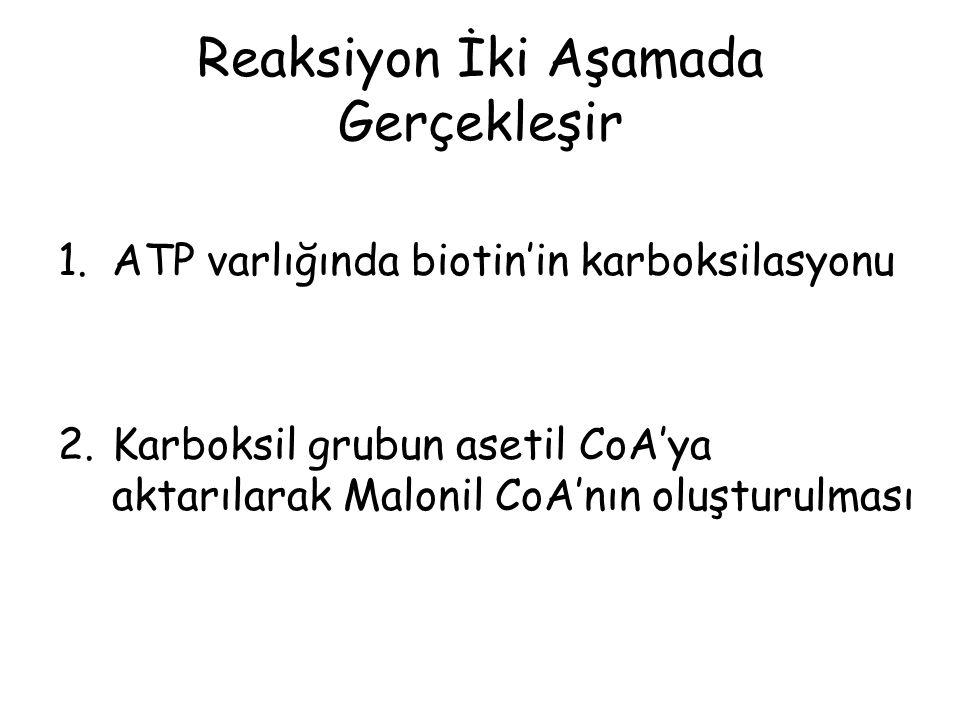 Reaksiyon İki Aşamada Gerçekleşir 1.ATP varlığında biotin'in karboksilasyonu 2.Karboksil grubun asetil CoA'ya aktarılarak Malonil CoA'nın oluşturulması