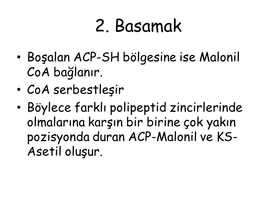 2.Basamak Boşalan ACP-SH bölgesine ise Malonil CoA bağlanır.