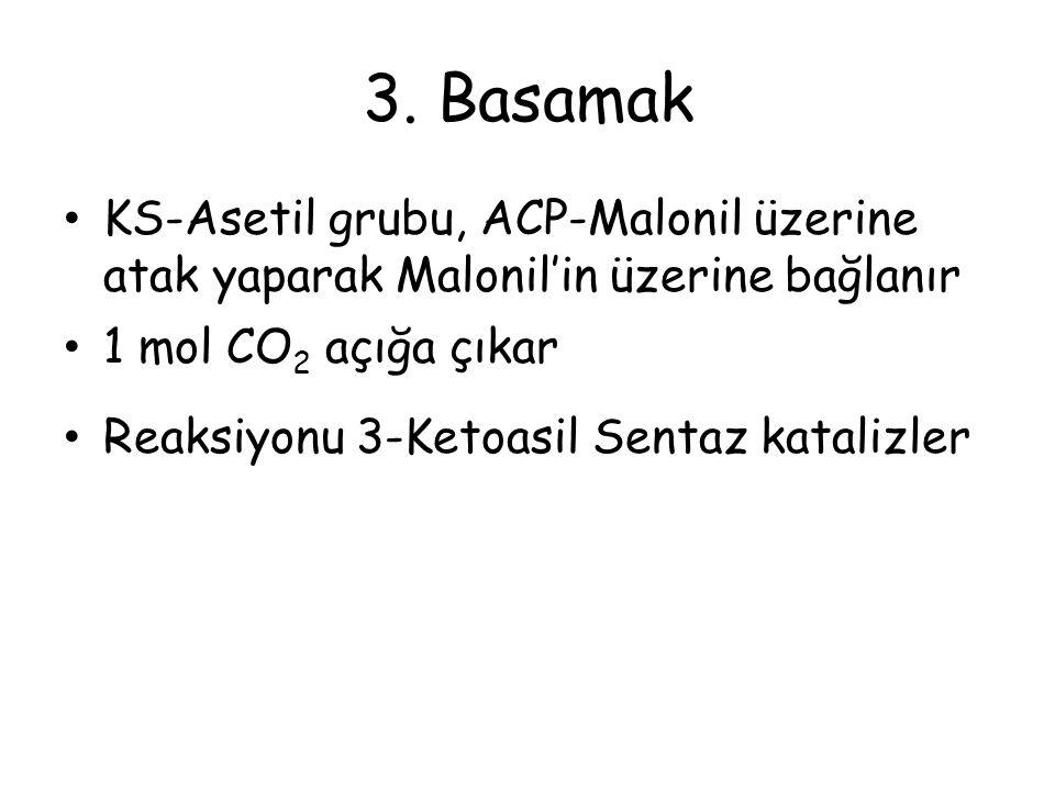 3. Basamak KS-Asetil grubu, ACP-Malonil üzerine atak yaparak Malonil'in üzerine bağlanır 1 mol CO 2 açığa çıkar Reaksiyonu 3-Ketoasil Sentaz katalizle