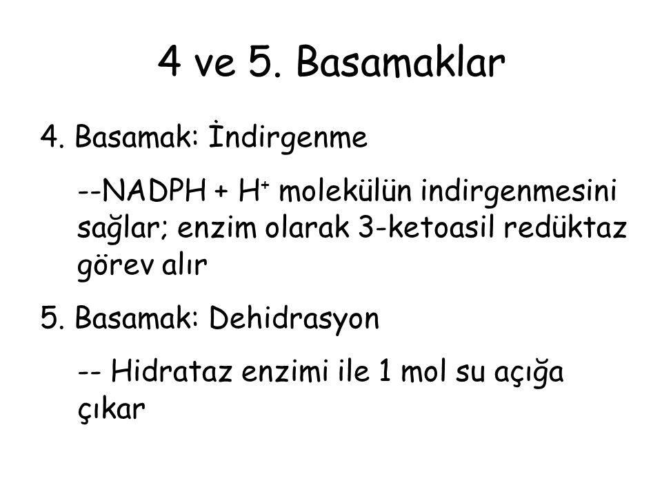 4 ve 5.Basamaklar 4.