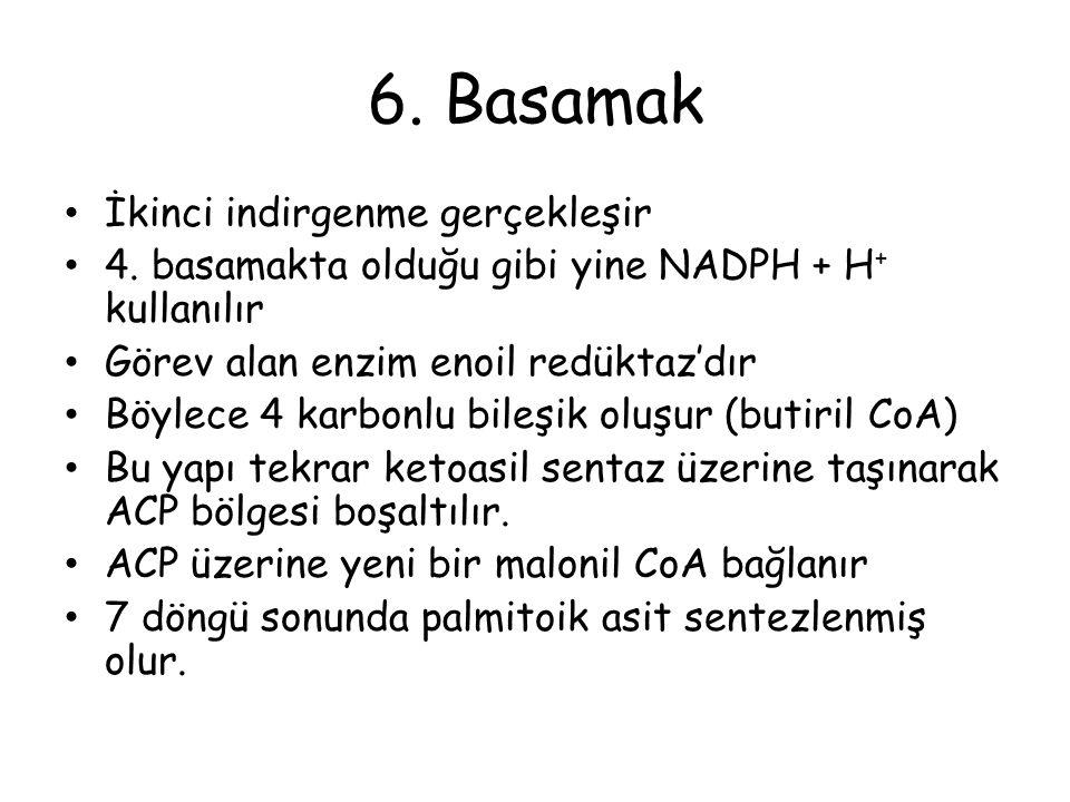 6.Basamak İkinci indirgenme gerçekleşir 4.