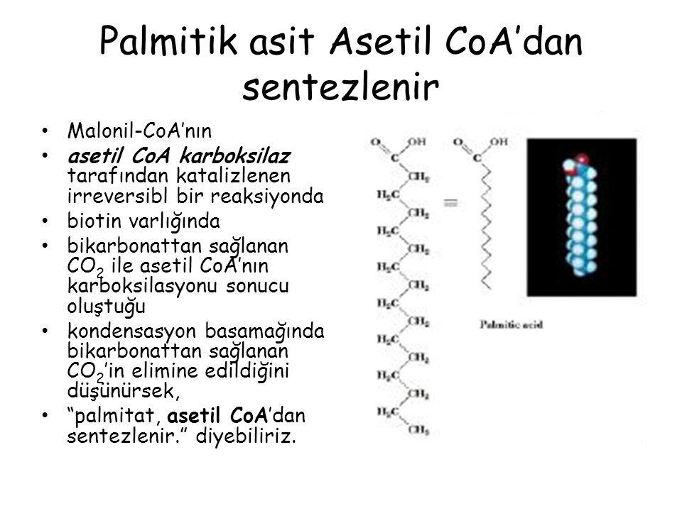 Palmitik asit Asetil CoA'dan sentezlenir Malonil-CoA'nın asetil CoA karboksilaz tarafından katalizlenen irreversibl bir reaksiyonda biotin varlığında bikarbonattan sağlanan CO 2 ile asetil CoA'nın karboksilasyonu sonucu oluştuğu kondensasyon basamağında bikarbonattan sağlanan CO 2 'in elimine edildiğini düşünürsek, palmitat, asetil CoA'dan sentezlenir. diyebiliriz.