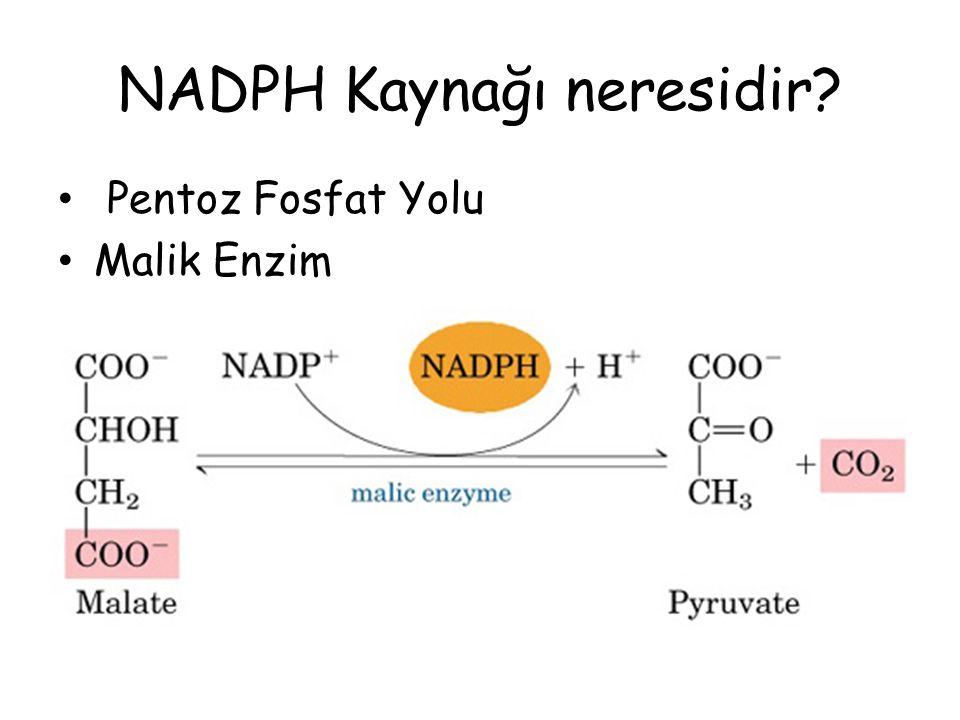 NADPH Kaynağı neresidir? Pentoz Fosfat Yolu Malik Enzim