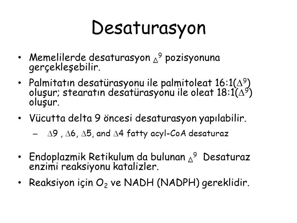 Desaturasyon Memelilerde desaturasyon Δ 9 pozisyonuna gerçekleşebilir.