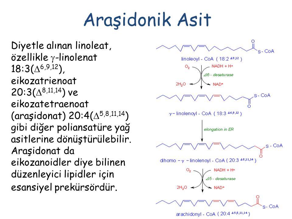 Araşidonik Asit Diyetle alınan linoleat, özellikle  -linolenat 18:3(  6,9,12 ), eikozatrienoat 20:3(  8,11,14 ) ve eikozatetraenoat (araşidonat) 20:4(  5,8,11,14 ) gibi diğer poliansatüre yağ asitlerine dönüştürülebilir.