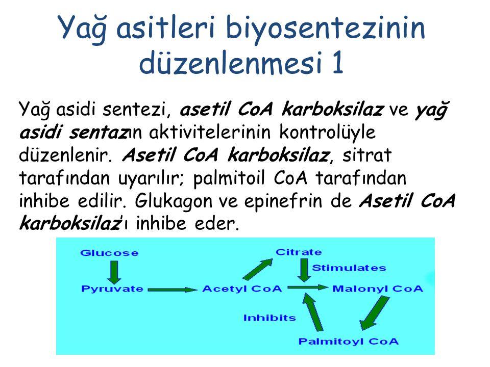 Yağ asitleri biyosentezinin düzenlenmesi 1 Yağ asidi sentezi, asetil CoA karboksilaz ve yağ asidi sentazın aktivitelerinin kontrolüyle düzenlenir.