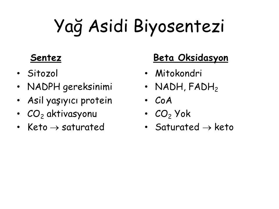 Yağ Asidi Biyosentezi Sentez Sitozol NADPH gereksinimi Asil yaşıyıcı protein CO 2 aktivasyonu Keto  saturated Beta Oksidasyon Mitokondri NADH, FADH 2 CoA CO 2 Yok Saturated  keto