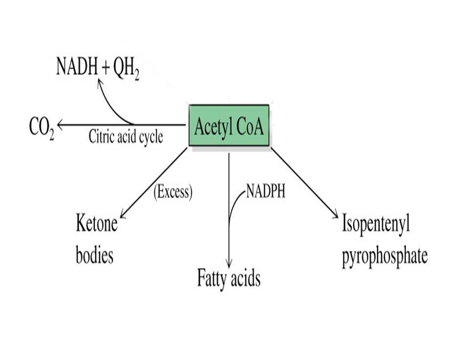 Yağ Asidi Sentezi için gerekli Asetil CoA nasıl temin edilir.