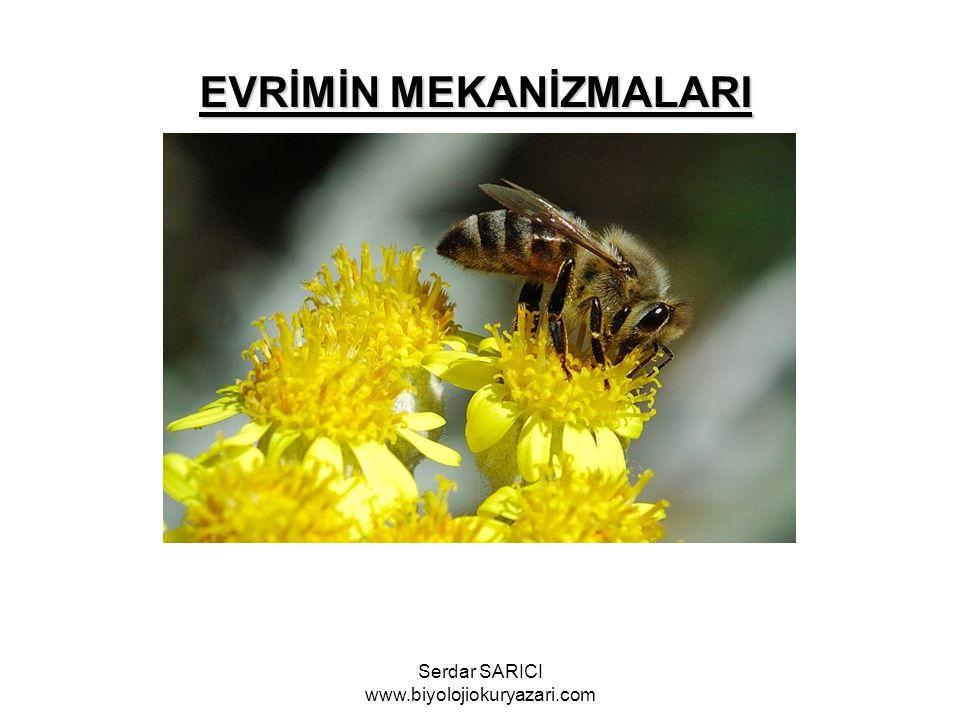 EVRİMİN MEKANİZMALARI Serdar SARICI www.biyolojiokuryazari.com