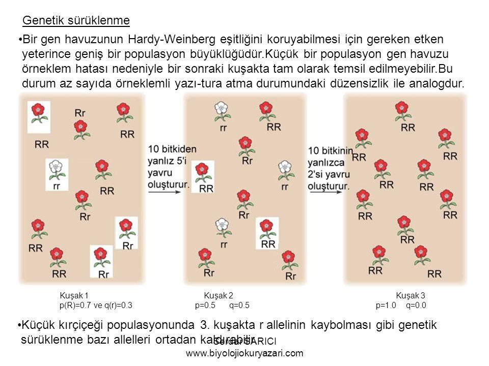 Genetik sürüklenme Bir gen havuzunun Hardy-Weinberg eşitliğini koruyabilmesi için gereken etken yeterince geniş bir populasyon büyüklüğüdür.Küçük bir populasyon gen havuzu örneklem hatası nedeniyle bir sonraki kuşakta tam olarak temsil edilmeyebilir.Bu durum az sayıda örneklemli yazı-tura atma durumundaki düzensizlik ile analogdur.