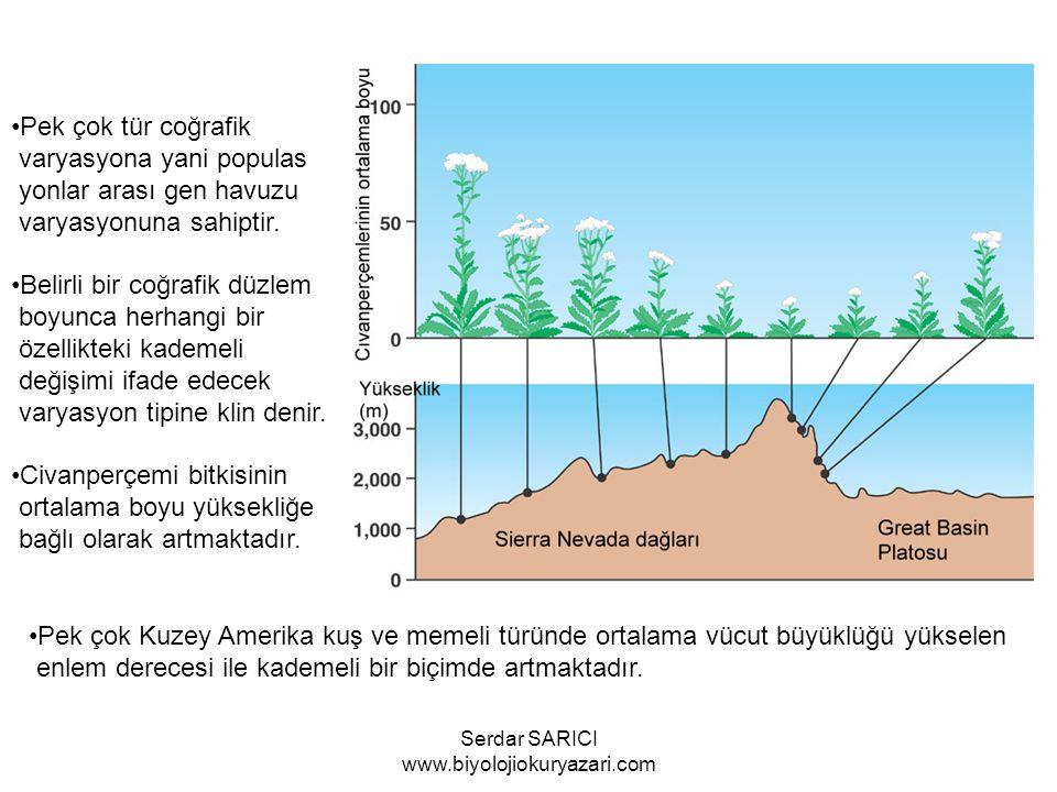 Pek çok tür coğrafik varyasyona yani populas yonlar arası gen havuzu varyasyonuna sahiptir.