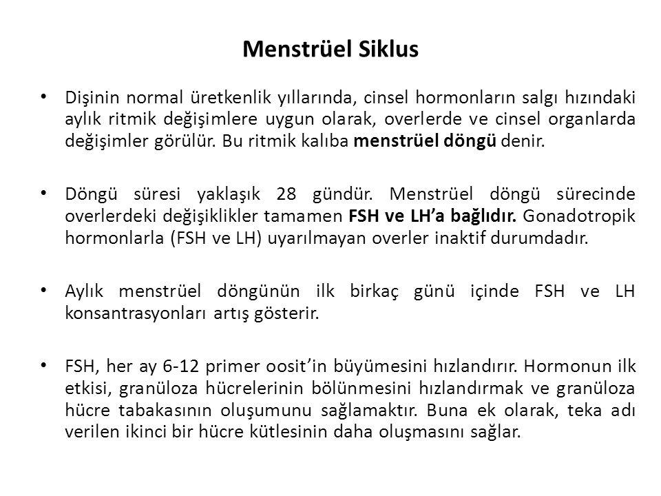 Menstrüel Siklus Dişinin normal üretkenlik yıllarında, cinsel hormonların salgı hızındaki aylık ritmik değişimlere uygun olarak, overlerde ve cinsel o