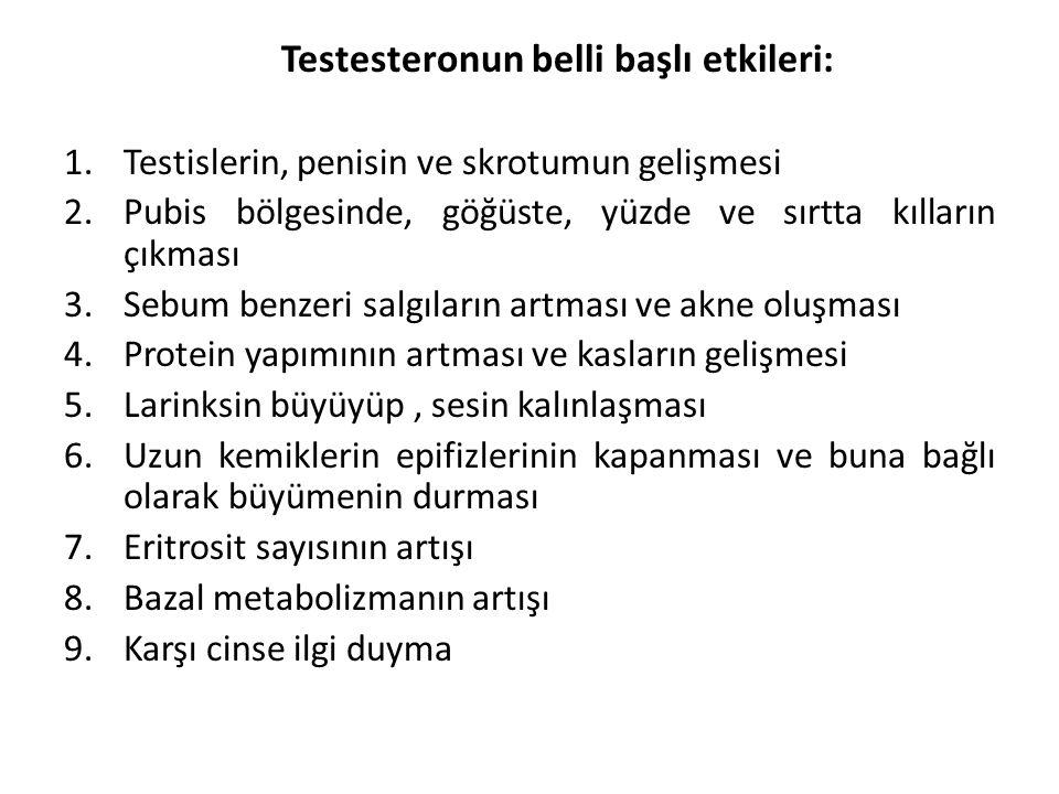 Testesteronun belli başlı etkileri: 1.Testislerin, penisin ve skrotumun gelişmesi 2.Pubis bölgesinde, göğüste, yüzde ve sırtta kılların çıkması 3.Sebu