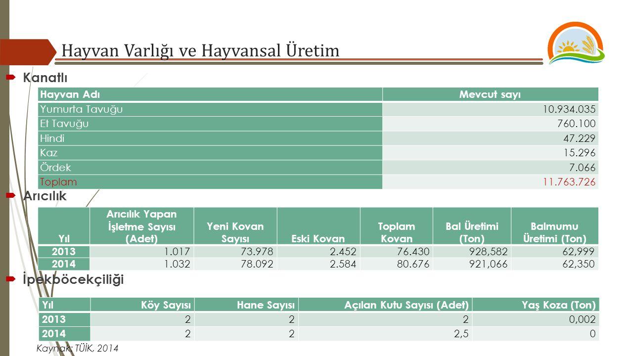 Hayvan Varlığı ve Hayvansal Üretim Kaynak: TÜİK, 2014  Arıcılık  Kanatlı Hayvan AdıMevcut sayı Yumurta Tavuğu10.934.035 Et Tavuğu760.100 Hindi47.229