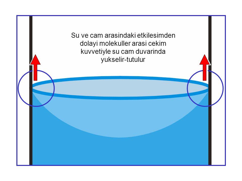 Su ve cam arasindaki etkilesimden dolayi molekuller arasi cekim kuvvetiyle su cam duvarinda yukselir-tutulur