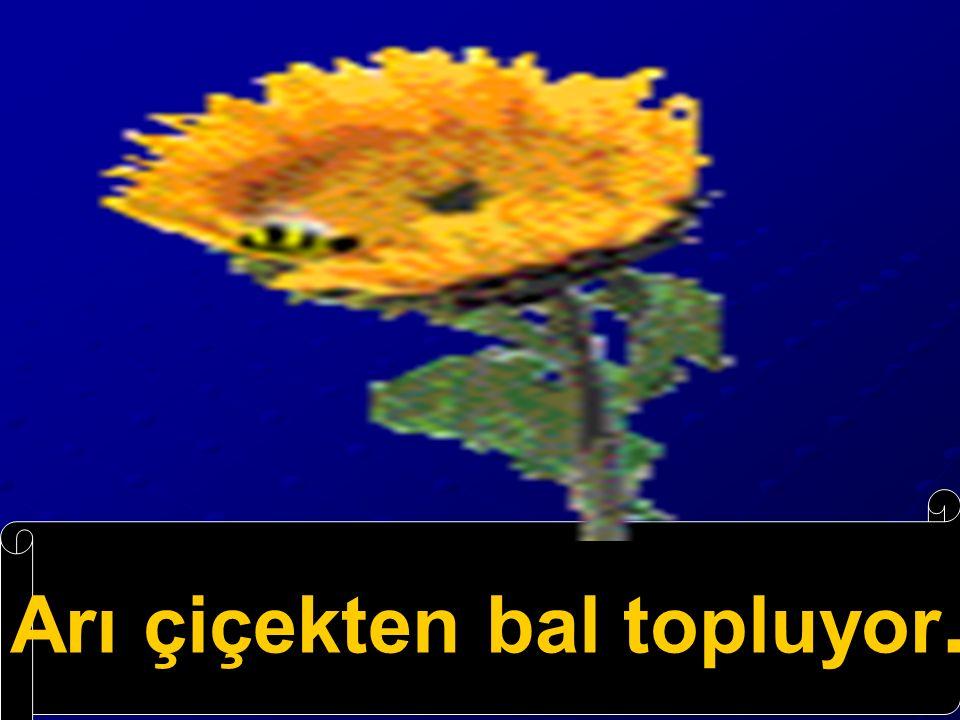 topluyor çiçekten bal arı