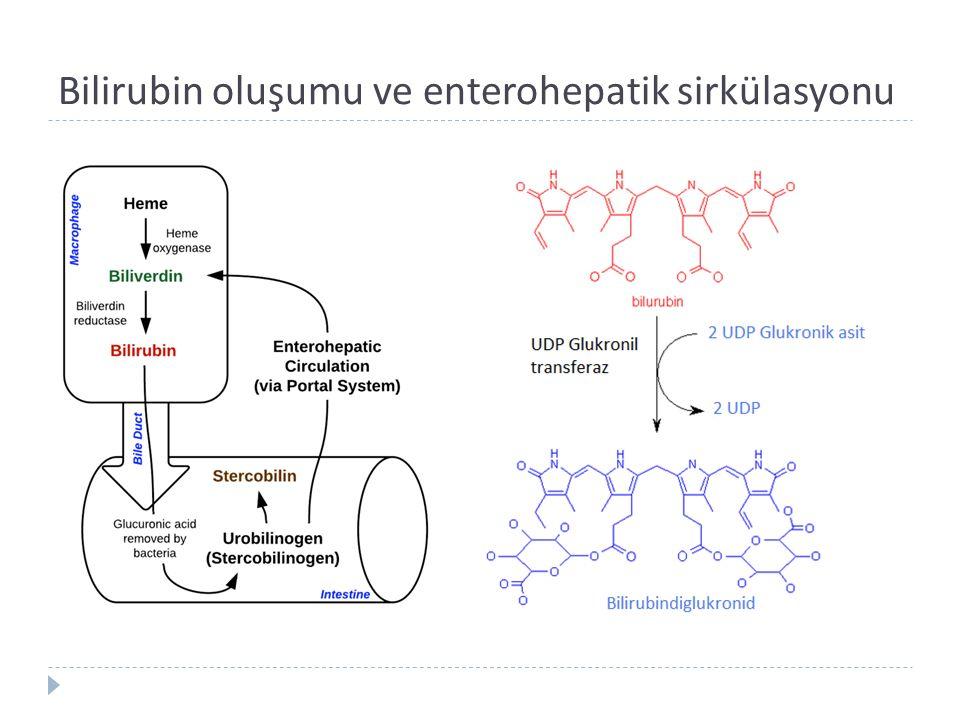 Bilirubin artışında mekanizmalar   Üretim   Kan volümü,   Eritrosit ömrü (90 gün)   İnefektif eritropoez   Non Hb hem proteinlerinin dönüşümü   Enterohepatik sirkülasyon:   Glukuronidaz   Bilirubin monoglukuronid   İntestinal bakteriler   İntestinal motilite ve defekasyon   Bilirubin Uptake :  ligandin   Konjugasyon :  UDPG-T aktivitesi   Bilirubinin hepatik ekskresyonu