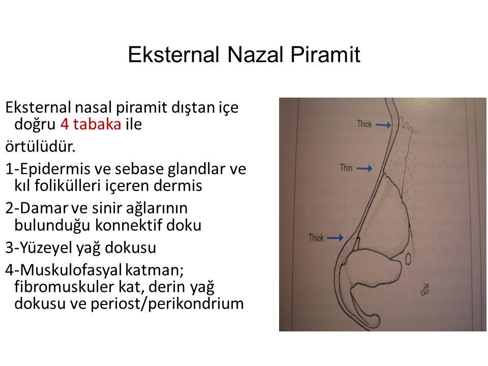 Eksternal Nazal Piramit Eksternal nasal piramit dıştan içe doğru 4 tabaka ile örtülüdür. 1-Epidermis ve sebase glandlar ve kıl folikülleri içeren derm