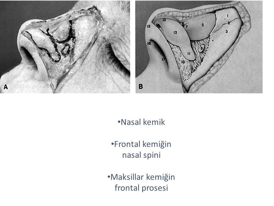 Nasal kemik Frontal kemiğin nasal spini Maksillar kemiğin frontal prosesi