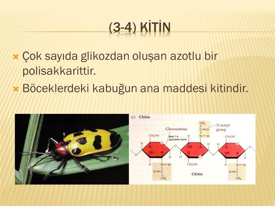  Çok sayıda glikozdan oluşan azotlu bir polisakkarittir.  Böceklerdeki kabuğun ana maddesi kitindir.