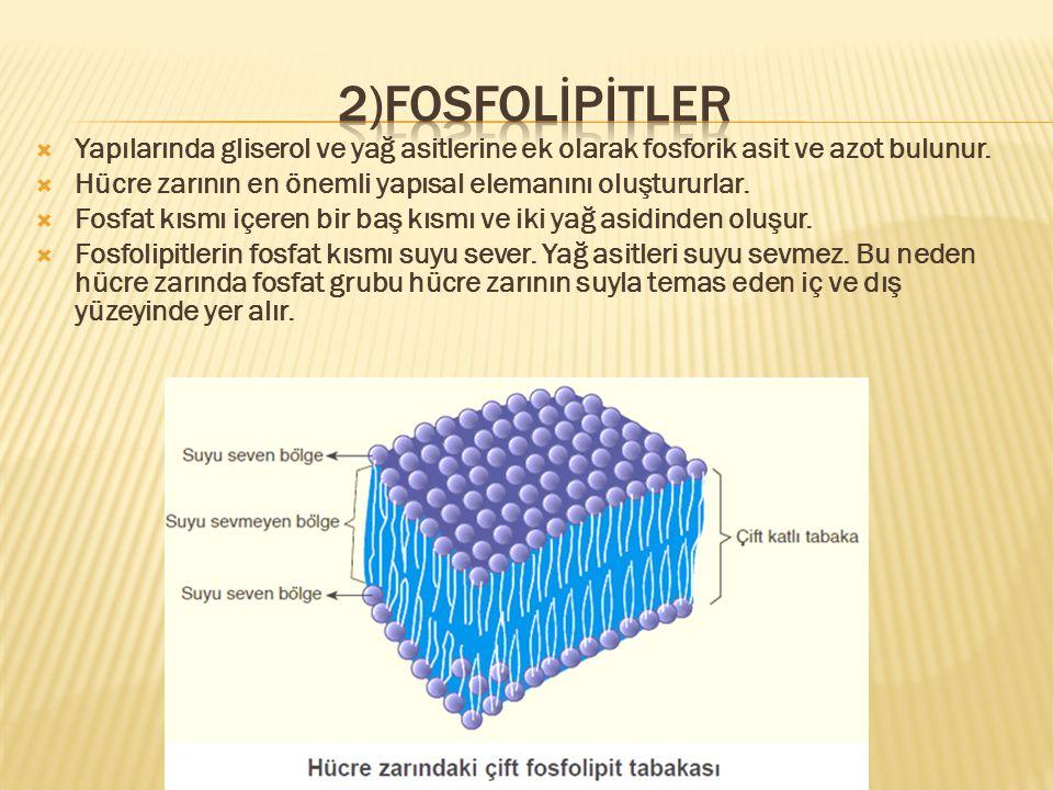  Yapılarında gliserol ve yağ asitlerine ek olarak fosforik asit ve azot bulunur.  Hücre zarının en önemli yapısal elemanını oluştururlar.  Fosfat k