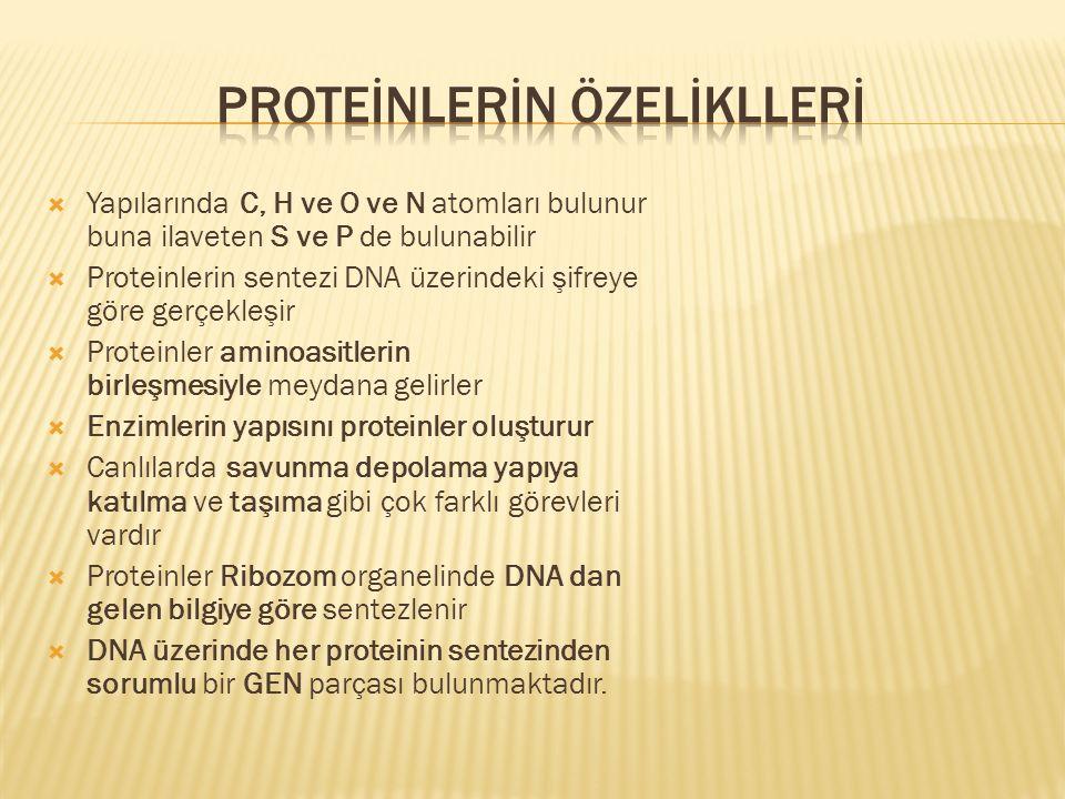  Yapılarında C, H ve O ve N atomları bulunur buna ilaveten S ve P de bulunabilir  Proteinlerin sentezi DNA üzerindeki şifreye göre gerçekleşir  Pro