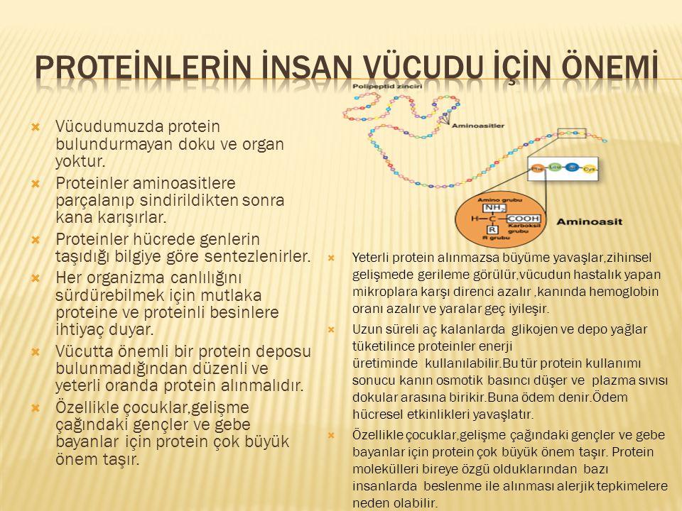  Vücudumuzda protein bulundurmayan doku ve organ yoktur.  Proteinler aminoasitlere parçalanıp sindirildikten sonra kana karışırlar.  Proteinler hüc