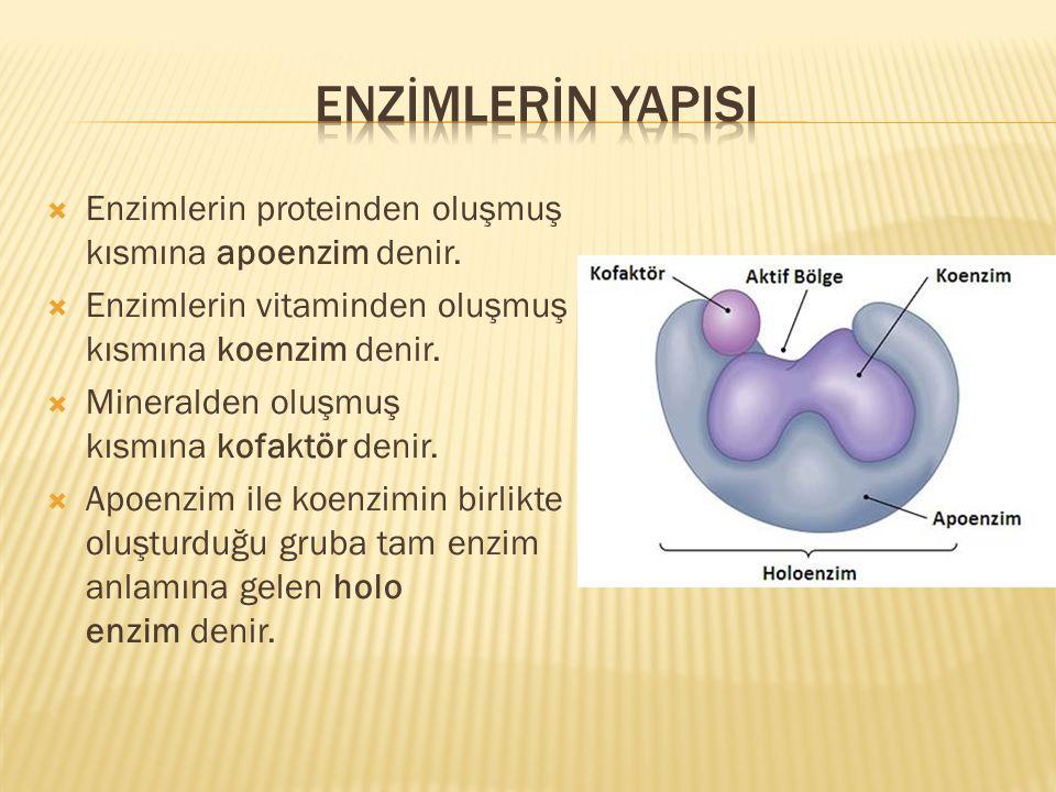  Enzimlerin proteinden oluşmuş kısmına apoenzim denir.  Enzimlerin vitaminden oluşmuş kısmına koenzim denir.  Mineralden oluşmuş kısmına kofaktör d