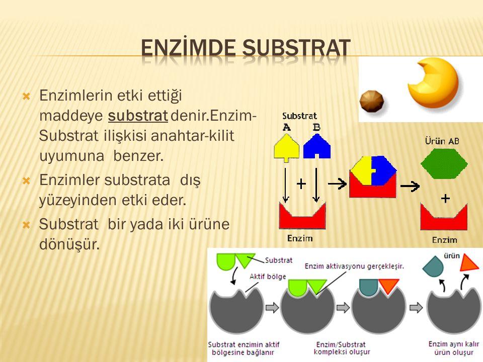  Enzimlerin etki ettiği maddeye substrat denir.Enzim- Substrat ilişkisi anahtar-kilit uyumuna benzer.  Enzimler substrata dış yüzeyinden etki eder.