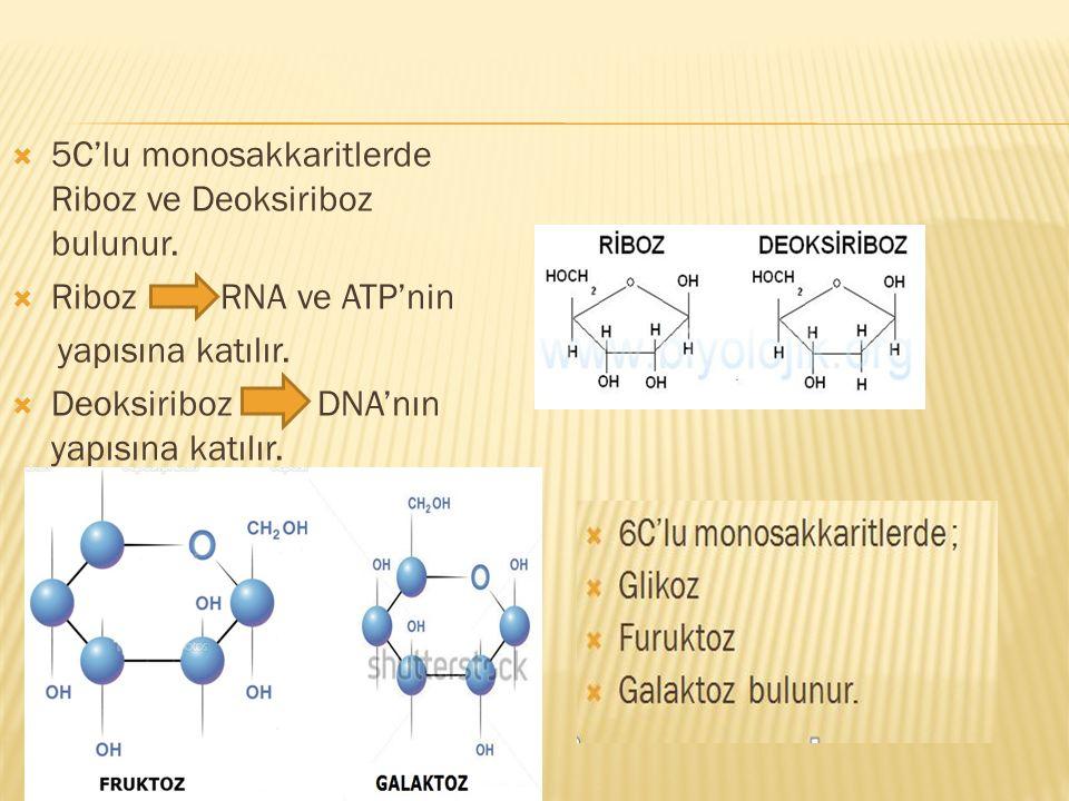  5C'lu monosakkaritlerde Riboz ve Deoksiriboz bulunur.  Riboz RNA ve ATP'nin yapısına katılır.  Deoksiriboz DNA'nın yapısına katılır.