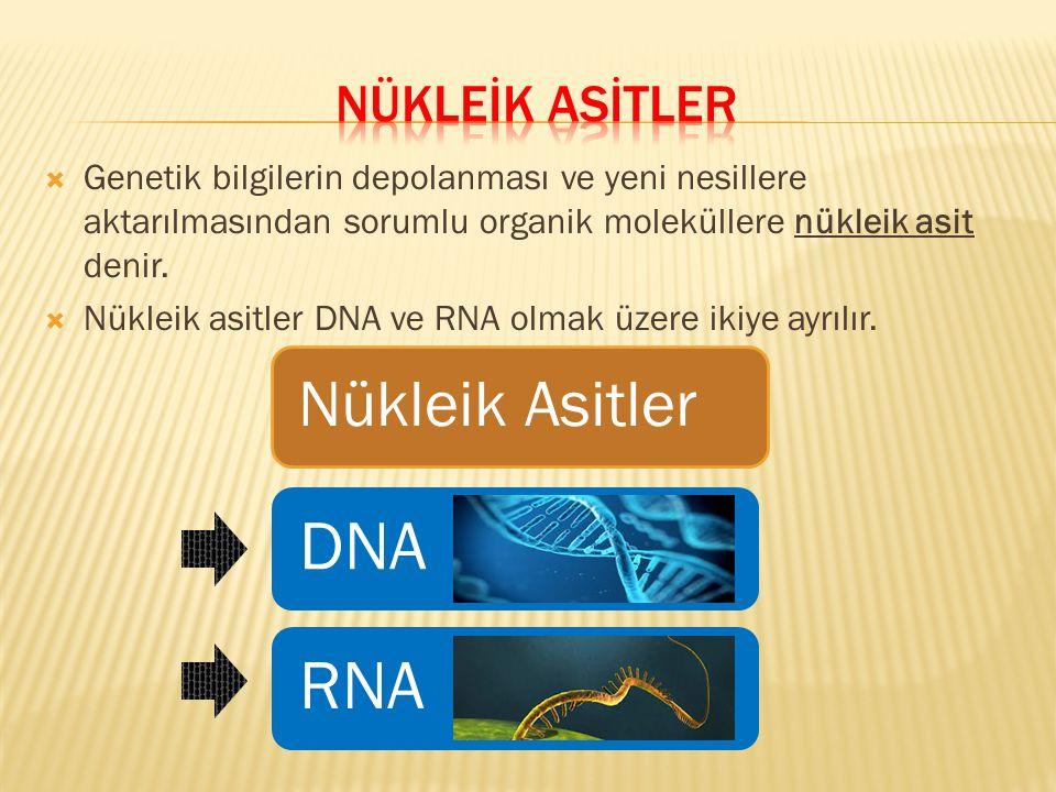  Genetik bilgilerin depolanması ve yeni nesillere aktarılmasından sorumlu organik moleküllere nükleik asit denir.  Nükleik asitler DNA ve RNA olmak