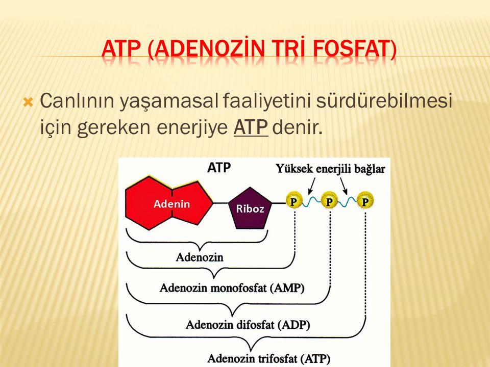  Canlının yaşamasal faaliyetini sürdürebilmesi için gereken enerjiye ATP denir.