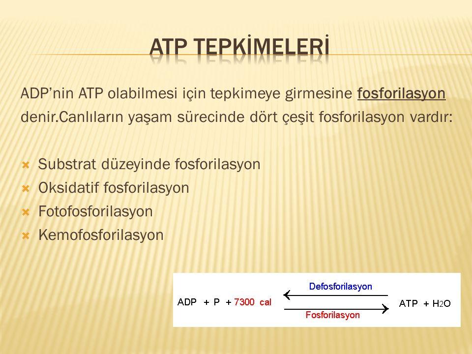 ADP'nin ATP olabilmesi için tepkimeye girmesine fosforilasyon denir.Canlıların yaşam sürecinde dört çeşit fosforilasyon vardır:  Substrat düzeyinde f