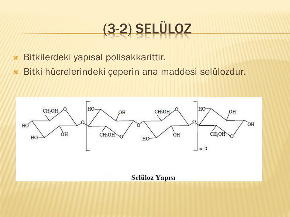  Bitkilerdeki yapısal polisakkarittir.  Bitki hücrelerindeki çeperin ana maddesi selülozdur.