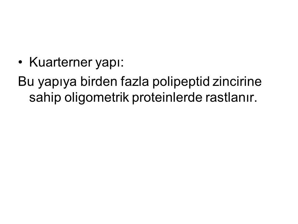 Kuarterner yapı: Bu yapıya birden fazla polipeptid zincirine sahip oligometrik proteinlerde rastlanır.