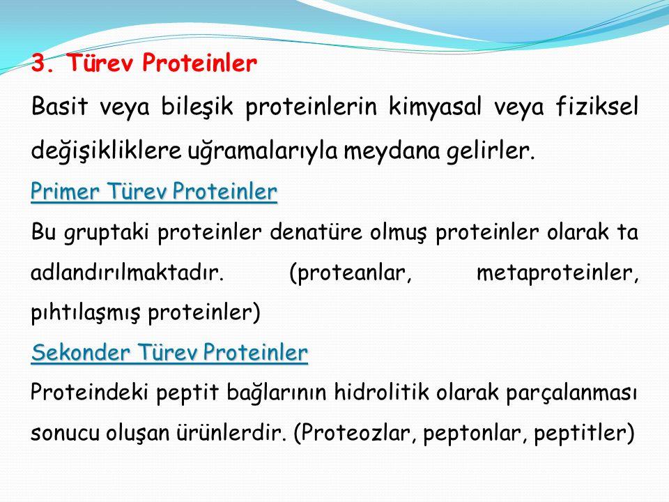3. Türev Proteinler Basit veya bileşik proteinlerin kimyasal veya fiziksel değişikliklere uğramalarıyla meydana gelirler. Primer Türev Proteinler Bu g