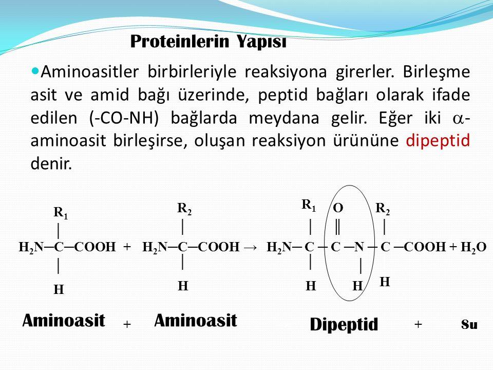 Proteinlerin Yapısı Aminoasitler birbirleriyle reaksiyona girerler. Birleşme asit ve amid bağı üzerinde, peptid bağları olarak ifade edilen (-CO-NH) b
