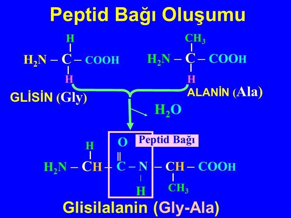 H 2 N – C – COOH H GLİSİN ( Gly ) ALANİN ( Ala) H 2 N – C – COO H CH 3 H 2 N – C H – H – CH – COO H CH 3 O ‖ C _ N  H H2OH2O Peptid Bağı Peptid Bağı Oluşumu Glisilalanin (Gly-Ala) HH